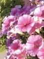 エステティックサロン ベルネ(BELLUNE)最近ピンク熱が再燃中。女性ホルモン活性化してます(笑)