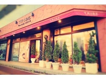 トライブ クリエートサロン(TRIBE create salon by SERVE)(北海道札幌市東区)