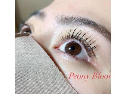 ピオニー ブルームス(Peony Blooms)の写真