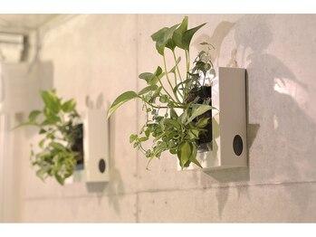 アロマアンドボディデザインサロン アースカラー 自由が丘(EARTH COLOR)/アースカラーの緑2