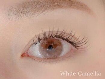 ホワイトカメリア(White Camellia)/フラットラッシュ100本