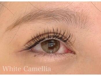 ホワイトカメリア(White Camellia)/フラットラッシュ140本
