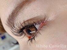 ホワイトカメリア(White Camellia)/フラットラッシュ付け放題