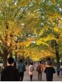 セルフリッシュ 町田店(SELFRISH)昭和記念公園の紅葉です♪ライトアップ綺麗でした!