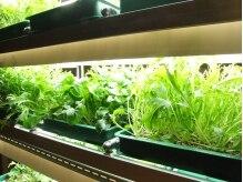 岩盤浴 だん暖の雰囲気(店内の植物ラボ★新鮮な野菜を使ったスム-ジ-で上質な栄養補給を)