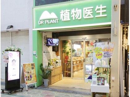 DR PLANT(植物医生) 本町店