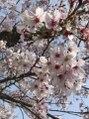 ネイルサロンサクラ(Sakura)/Nail Salon Sakura