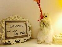 ル ダリ(Le.Dali)