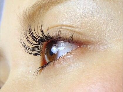 アイラッシュマルヴァ(Eye Lash Malva)の写真