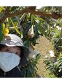 デュ ブラン サロン ド ボーテ香川県が全国で第3位の生産を誇るビワの栽培修行中