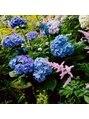 カレンダイカンヤマ (KALEN DAIKANYAMA)鎌倉の紫陽花ですヘッドスパ/マッサージ》