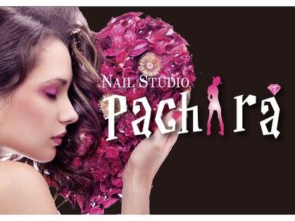 パキラ(Pachira)の写真