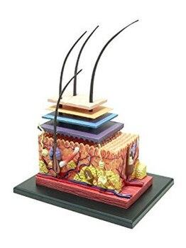 ビューティサロン 月輝/毛穴に関するお悩みは皮膚模型で