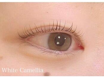 ホワイトカメリア(White Camellia)/まつ毛パーマ