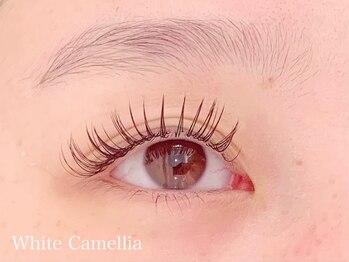 ホワイトカメリア(White Camellia)/フラットマットラッシュ 100本