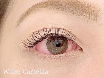 ホワイトカメリア(White Camellia)/フラットマットラッシュ120本