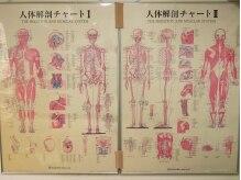 渋谷宇田川町カイロプラクティック/身体の仕組み
