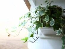 観葉植物もリラックスできる雰囲気に一役かって癒される