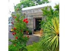 モイ(Moi)の雰囲気(暖かくなると緑と鮮やかなブラシの花が元気いっぱい。)