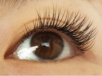 ロータスアイラッシュ(LOTUS eyelash)/Cカール140本(下からのイメージ)