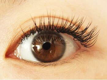 ロータスアイラッシュ(LOTUS eyelash)/Cカール140本(正面のイメージ)