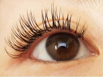 ロータスアイラッシュ(LOTUS eyelash)/CCカール140本