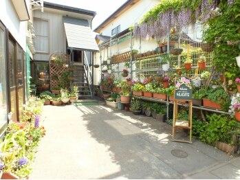 マラカイト(MALACHITE)(青森県三沢市)