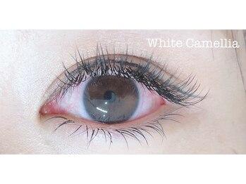 ホワイトカメリア(White Camellia)/フラットラッシュ160本