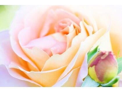 ピンクパピヨン(Pink Papillon)の写真