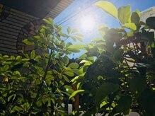 陽だまりの杜/陽だまりの杜 イメージ