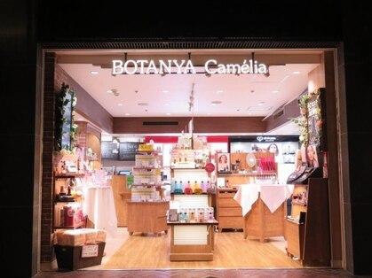 ボタンヤ キャメリア(BOTANYA Camelia)の写真