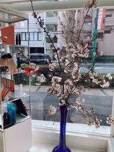 ポーラ ザ ビューティ 星ヶ丘店(POLA THE BEAUTY)/桜