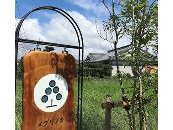 メグリノキ(宮崎県北諸県郡三股町)