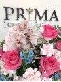 PRIMA(PRIMA)