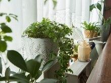 ピース(Peace)の雰囲気(緑に囲まれた癒しの空間でリラックスモード♪)