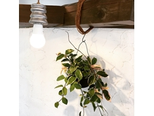 店内の観葉植物や、オーダーメイドのインテリアも自慢です。