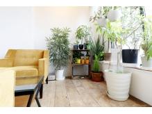 たくさんの植物に囲まれてゆったりできるウェイティングルーム