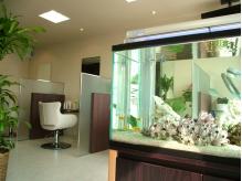 お店に入ると熱帯魚が…♪可愛い姿に癒されます。