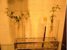 店内にはいたるところに観葉植物が…☆癒されます。