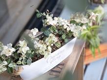 花や緑があなたを温かく迎えてくれます