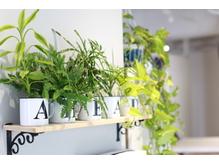 日当たり良く明るい店内に沢山の観葉植物。空気も綺麗です☆