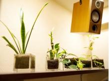 店内の所々に飾られてる観葉植物☆ココロ癒されます…