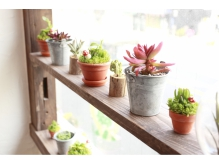 可愛い植物たちにココロ癒される、陽の光あふれる明るい空間♪