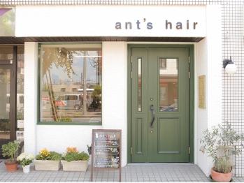 アンツヘア(ant's hair)