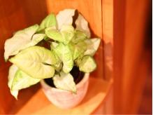 観葉植物の優しいグリーンを見てリラックス☆