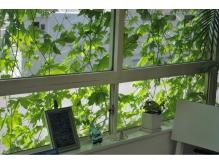 夏…の窓際です。緑がいっぱい