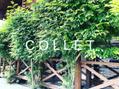コレット(COLLET)