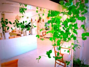 ビューティフルガーデンズ(Beautiful Gardens)(山口県山口市/美容室)