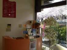 植物の多い店内で緑に癒されます。