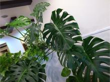 お店に入ると大きな観葉植物がお出迎え!